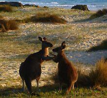 Kangaroos times two by Of Land & Ocean - Samantha Goode