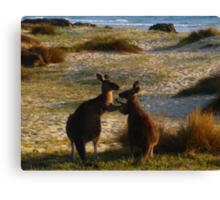 Kangaroos times two Canvas Print