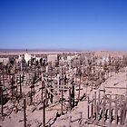 Atacama graveyard by Syd Winer