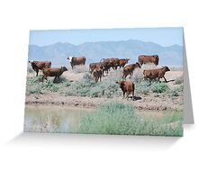 Stay Away From Our Water Hole! Greeting Card
