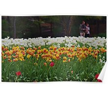 Tulip Beds Poster
