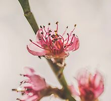 Rainy Day Peach Blossoms by ghd-photography