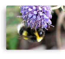 Bumble Bee by Loch Ness Canvas Print