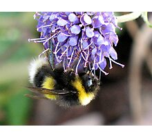 Bumble Bee by Loch Ness Photographic Print
