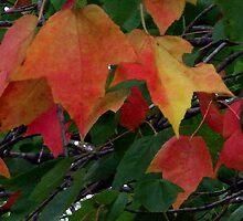 Soon Autumn by psphotogallery
