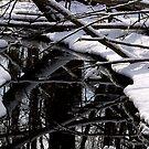 Winter Reflection by Jeff Harris