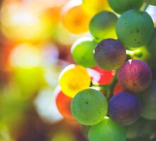 Rainbow On The Vine by ghd-photography