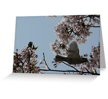 Tree sparrows amongst the Cherry blossom Greeting Card