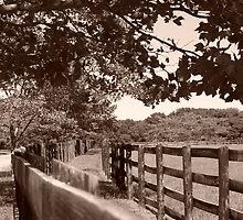 Country lane by Barbara Gerstner