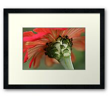 Backside Framed Print