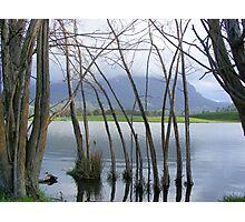 peeking at Mt Roland, from Paradise, Tasmania Photographic Print
