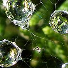 Raindrops Keep Falling on my Web!! by dougie1