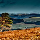 View to the North East from above Yair Bridge, Scottish Borders by Iain MacLean