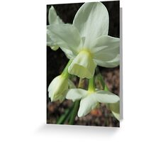 Creamy White and Lemon Daffodils Greeting Card