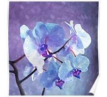 Blue Orchid-Art Prints-Mugs,Cases,Duvets,T Shirts,Stickers,etc Poster