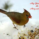 May your Days be Merry and Bright! by Paul Gitto