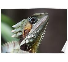 Male Boyds Forrest Dragon Poster