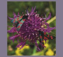 """Greater Knapweed with """"6-spot Burnet"""" Moths Kids Clothes"""