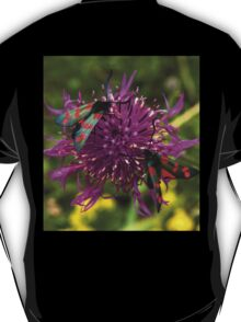 "Greater Knapweed with ""6-spot Burnet"" Moths T-Shirt"