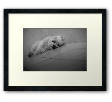Lazy Boy Hank Framed Print