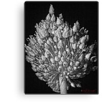 Guess What? (2) Canvas Print