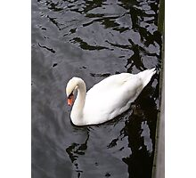Swan on dark water Photographic Print