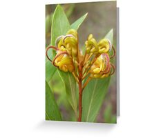 Orange Marmalade Greeting Card