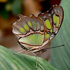 BUTTERFLY POSE #2 by Johan  Nijenhuis