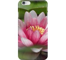 Pink blush. iPhone Case/Skin