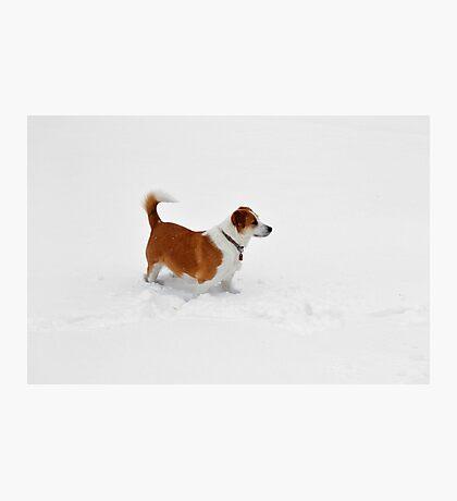 Interrupting the Winter Whiteness Photographic Print
