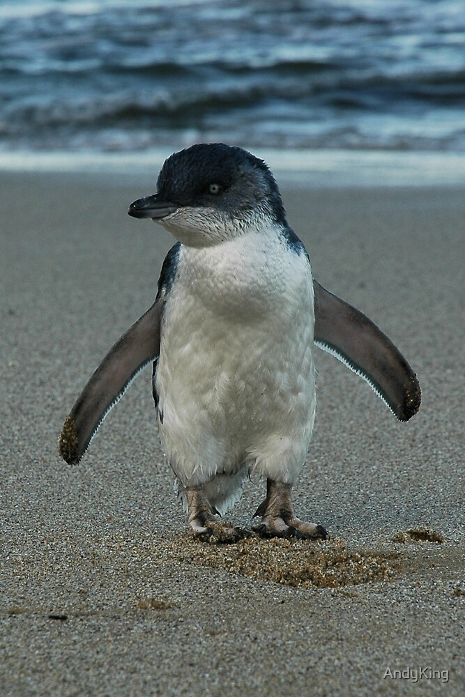 Penguin by AndyKing