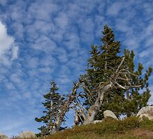 High in the Sierra by Richard Thelen