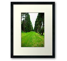 Pine Tree Avenue Framed Print