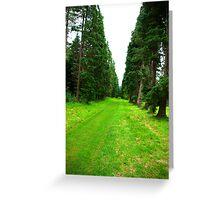 Pine Tree Avenue Greeting Card