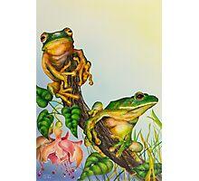 Wildlife - Green Tree Frogs Photographic Print