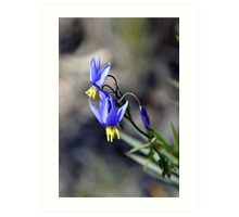 Wild Orchid - Black Mountain Canberra Art Print