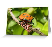Stink Bug Eggs 00001 Greeting Card