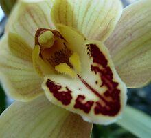 Orchid Bloom 1-1 by beeden