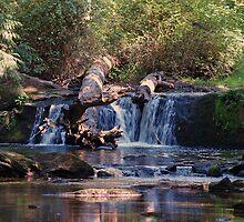 Whatcom Creek by Jack McCallum