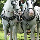 White Shires by Susan E. King