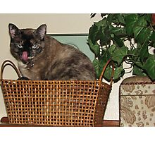 Cat in a Basket Photographic Print