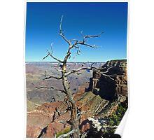 Canyon Branch Poster
