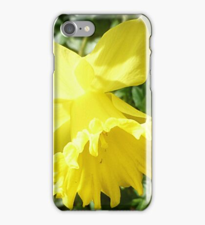 *Lovely Daffodil in the garden* iPhone Case/Skin