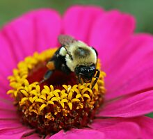 Busy Bee by BigD