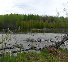 Beaver Pond by MaeBelle