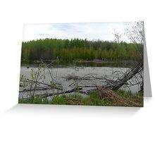 Beaver Pond Greeting Card