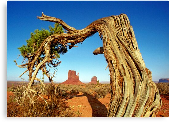 Monument Valley Tree by Mark Ramstead