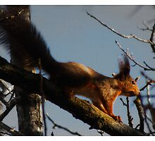 Squirrels are taking over by magnemyhren