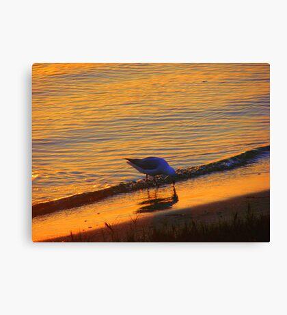 Beach Gull Canvas Print