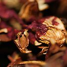 Dried Flowers by Lee  Travathan
